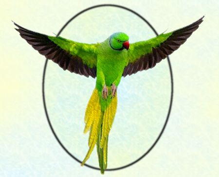Ringneck1T_450w.png